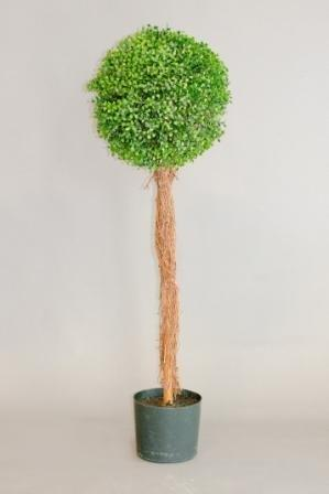 Products W1 -22_topriary_tree